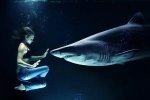soñar-con-tiburones