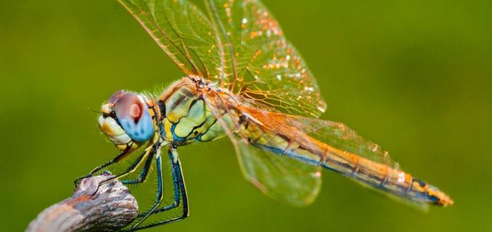 soñar-con-insectos-voladores