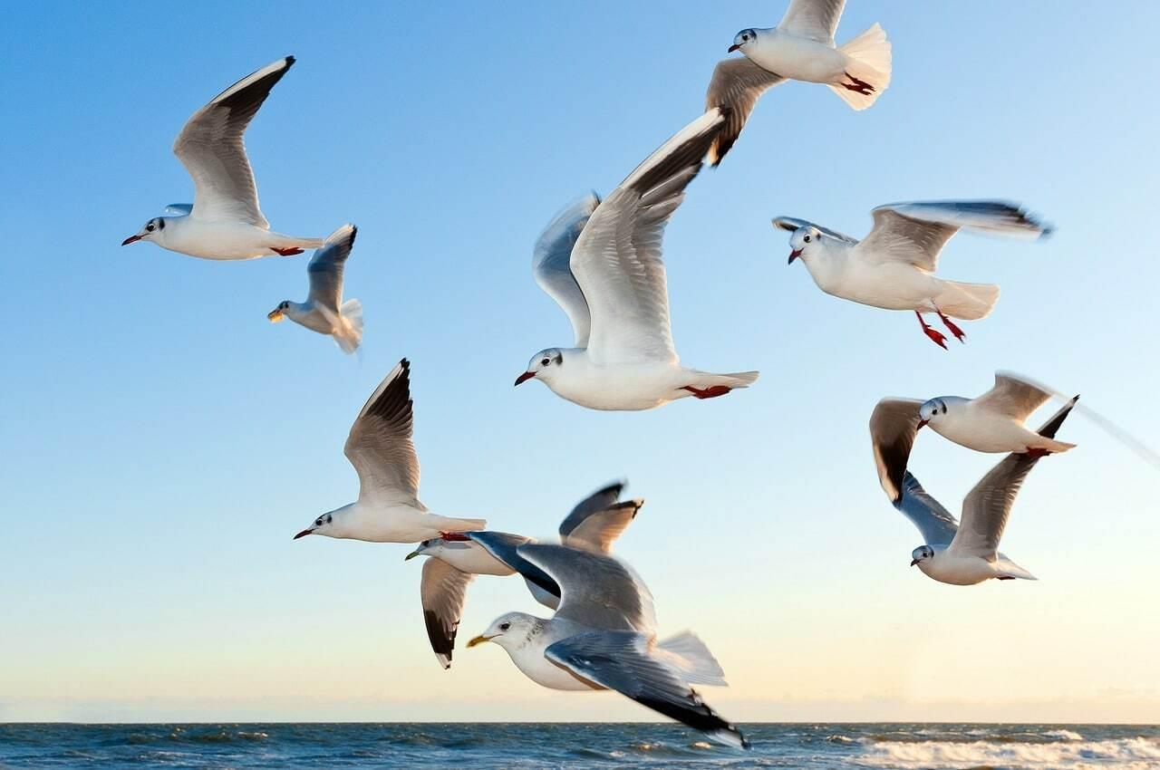 aves significado espiritual