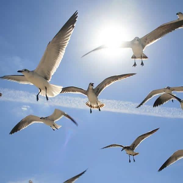 soñar-con-pájaros